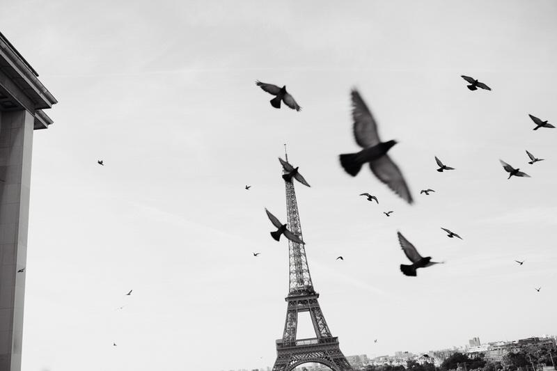 place des Trocadéro avec des pigeons